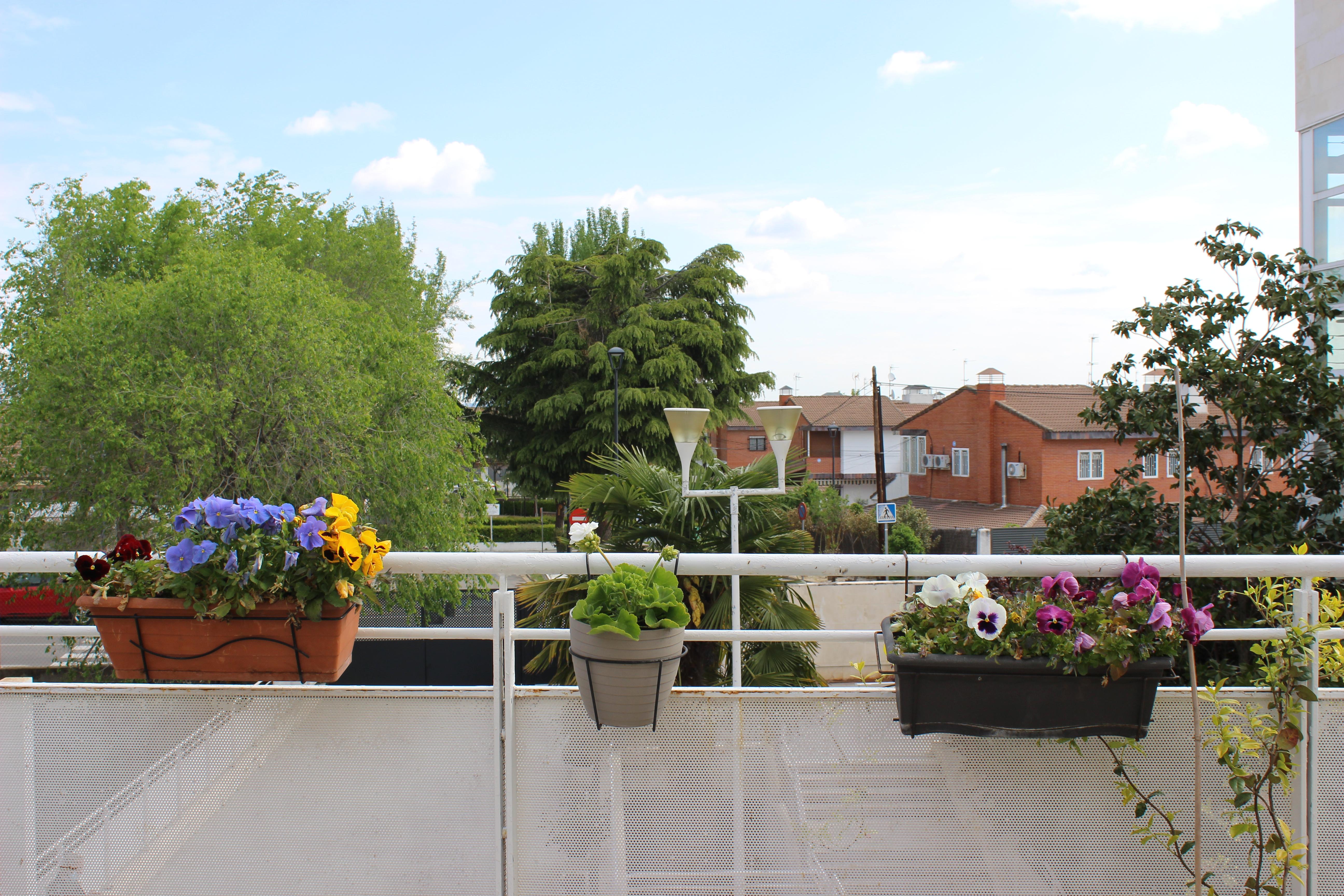 Vuelven el huerto y las flores a Urbanización de Mayores